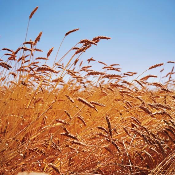 hayden-flour-mills-landscape-131-d112232r_sq